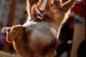 hamster akakakaka