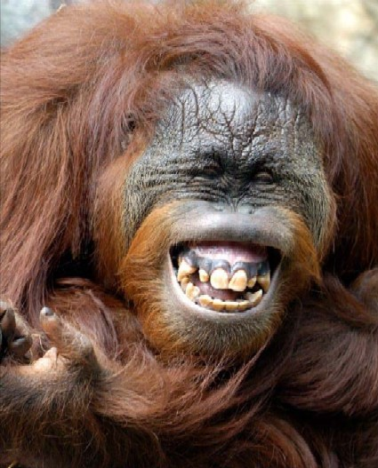 big smile animal - photo #9
