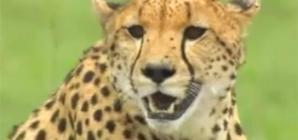 videos animaux sauvages d'afrique