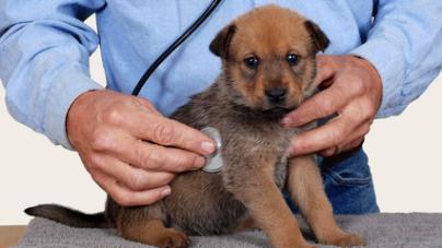 On peut transmettre certaines maladies à nos animaux de compagnie