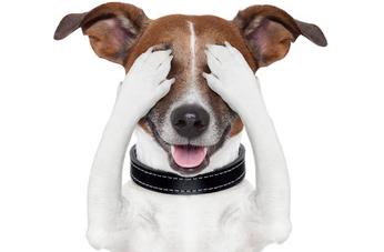 Les chiens d'aveugle