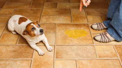 Les animaux aussi sont assujettis aux risques domestiques