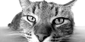 Assurances pour animaux, qui en sont les bénéficiaires