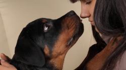 Pourquoi prendre une assurance pour un chien ?