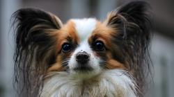Assurance santé animale: faire attention à ses choix