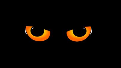 Les yeux des chats brillent dans la nuit, pourquoi?