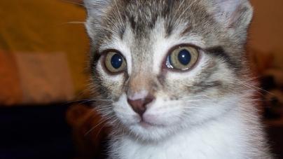 Dossiers pratique sur les animaux - Loi sur les chats et le voisinage ...