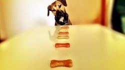 Cuisinez des friandises délicieuses pour votre chien