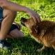 Apprenez à bien caresser votre chien