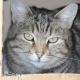 Les chats et les boîtes, une grande passion