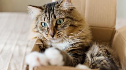 Aider son animal à s'adapter à un déménagement