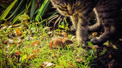Les plantes à mettre dans son jardin pour son chat