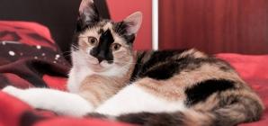 Dormir avec son chat est-il une bonne idée ?