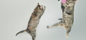 Comment expliquer les étranges comportements du chat