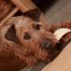 Les préférences alimentaires des chiens