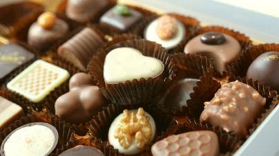 Faut-il donner du chocolat à son chien ou à son chat ?