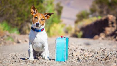 Comment éviter que son chien fugue