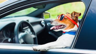 Votre animal de compagnie et les trajets vers les vacances