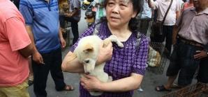 Une Chinoise sauve 100 chiens destinés à terminer en repas