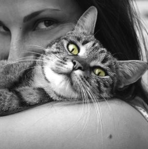 Le chat, un animal indépendant, mais qui ne rechigne pas les câlins
