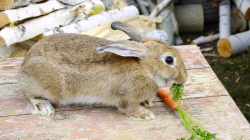 Comment bien alimenter son lapin