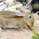 Comment bien alimenter son lapin