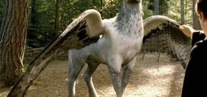 Un film sur les animaux fantastiques de l'univers d'Harry Potter