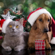 Les animaux aussi ont le droit à Noël