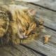 L'obésité, un mal présent aussi chez les animaux