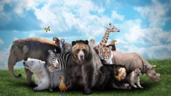 Zootopia : l'avenir des zoos ?