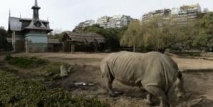 Le zoo de Buenos Aires ferme ses portes