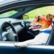 Nos conseils pour partir en vacances avec votre chien