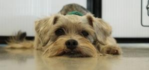 Un geste louable : une américaine règle les frais d'adoption de  900 animaux de refuge