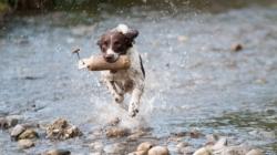 Nos astuces pour protéger le chien de la chaleur