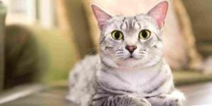 Câlineur de chat : nouvelle alternative de travail ?