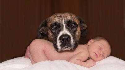 Chien et bébé : les clés d'une bonne relation
