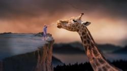Savez-vous pourquoi les girafes ont un long cou ?