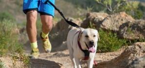 Le canicross ou faire du sport avec son chien