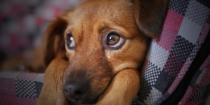 Comment gérer la cohabitation entre chiens ?