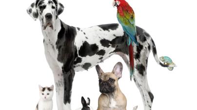 Garde animaux