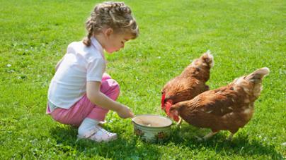 photos animaux de la ferme