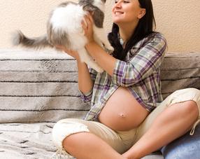 animaux et femme enceinte