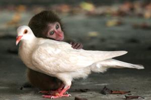 singe et oiseau