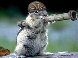 animaux et bazooka