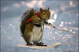 ski sur glace pour animaux