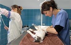 Pourquoi stériliser les chiens et les chats?