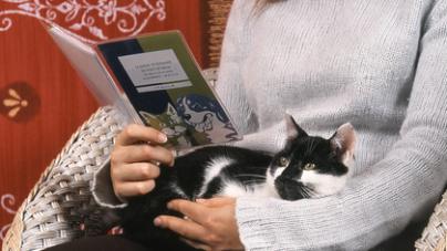 Bien comprendre les assurances animaux