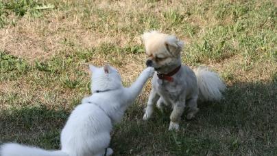 Le difficile choix entre un chien ou un chat