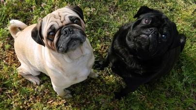 Quelles garanties avec une assurance santé pour animaux
