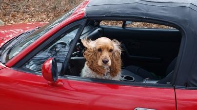 Il n'est pas facile de voyager avec son animal